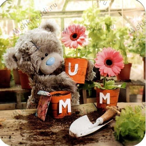 Mum Plant Pots Mothers Day Me to You Bear Card Mum Plant Pots Mothers Day Me to You Bear Card